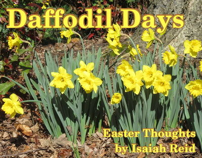 'Daffodil Day's' title image on a a photo of multiple daffodils.