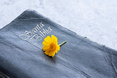 Photo of a yellow flower on the cover of a Spanish Bible